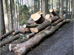 Energieholz - Rhode Kornberg